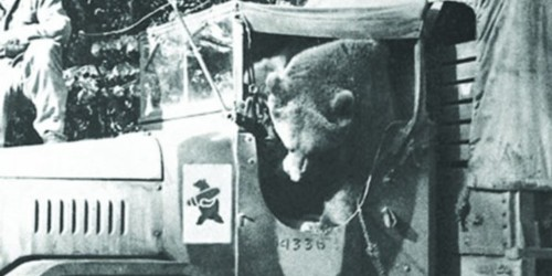 The story of Wojtek, the 440-pound bear that fought the Nazis in World War II, is being made into a movie