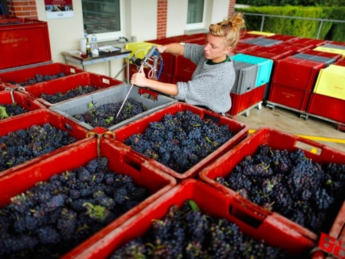 2017 may see record low output of French wines after frost