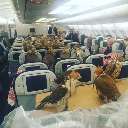 A bizarre photo of 80 giant birds on a plane is taking over the internet — but it isn't as strange as you think
