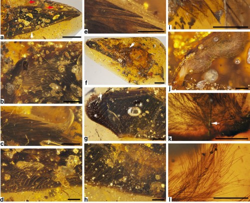 Scientists discovered two feather-covered dinosaur wings preserved in amber