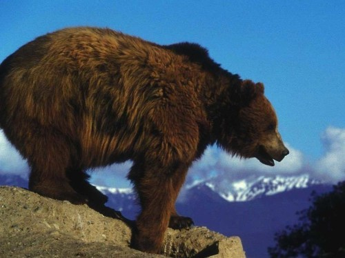 A retired Navy SEAL explains how to survive a bear attack