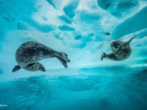 Wildlife Photographer of the Year 2017 photos are stunning