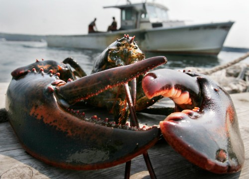 A big shift is coming to the Maine lobster population — and it could devastate the local economy