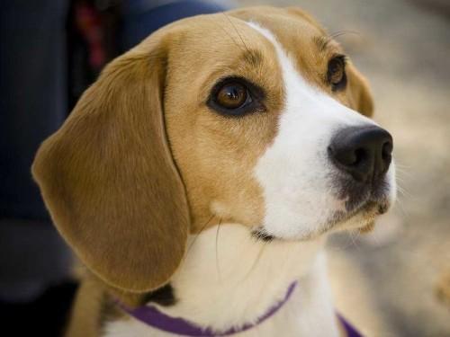 FDA Warns Of Illness Tied To Jerky Treats That Has Killed Nearly 600 Pets