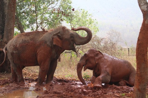 Retired elephants live in this nursing home in Myanmar: photos