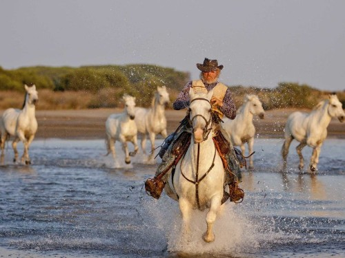 Meet The Cowboys Of Southern France