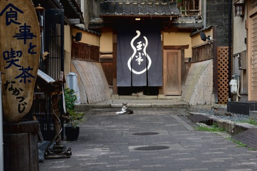 This Ancient Japanese City Can Only Be Appreciated Through Cat Pictures