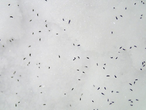 Bugs survive the winter through a trick straight out of science fiction