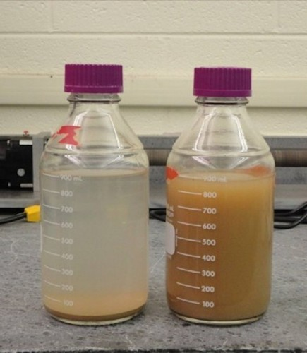 Scientists discover how a simple ancient practice makes dirty water drinkable
