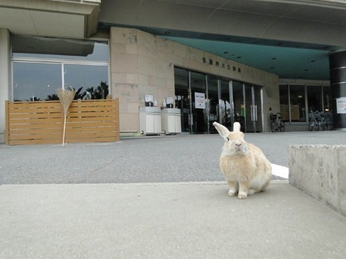 Japan once tested poison gas on rabbits on this secret island — now rabbits have taken over