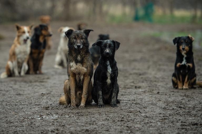ICB Dog News Feed - cover