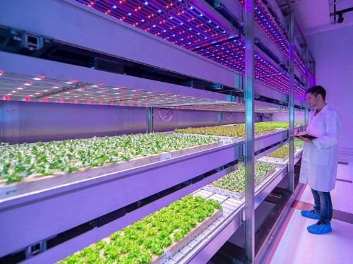 The solution to feeding the world's growing population doesn't require any sunlight or soil