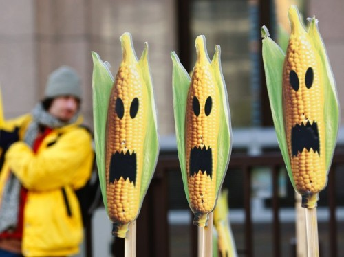 All of our food is 'genetically modified' in some way — here are the different types of GM technology