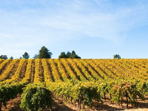 5 trips every wine lover should take