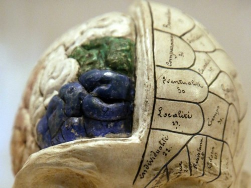 This Incredible Video Of A Freshly Harvested Brain Shows How Amazingly Fragile It Really Is