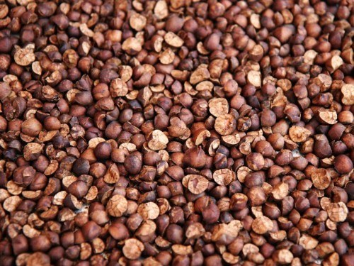 Mexican jumping beans actually jump — here's why