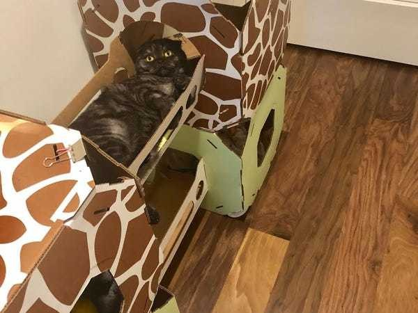 This cardboard cat condo is one of the best purchases I've made as a cat owner - Business Insider