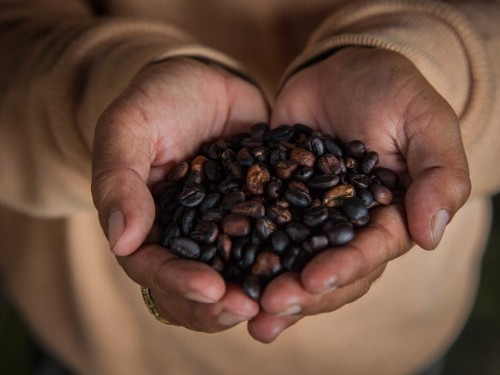A program funded by Bill Gates is helping pull East African coffee farmers out of poverty