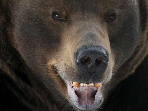 Anyone who's worried about a bear market should see these 3 charts