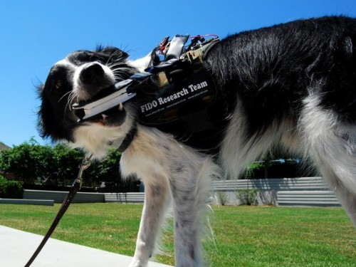Dogs could soon talk to humans with new wearable tech