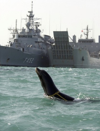 9 unbelievable instances of animals in the military