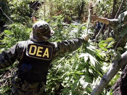 The DEA will soon decide whether the US should stop treating marijuana like heroin