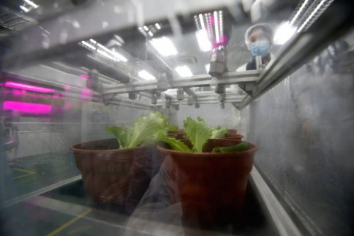 Panasonic's first indoor farm can grow over 80 tons of greens per year — take a look inside