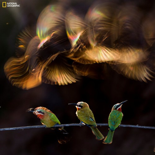 Jaw-dropping images from National Geographic's 2015 Photo Contest