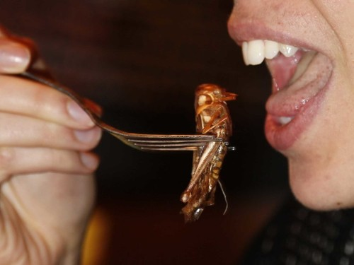 A Parisian Restaurant Is Making Beetles And Grasshoppers Look Pretty Tasty