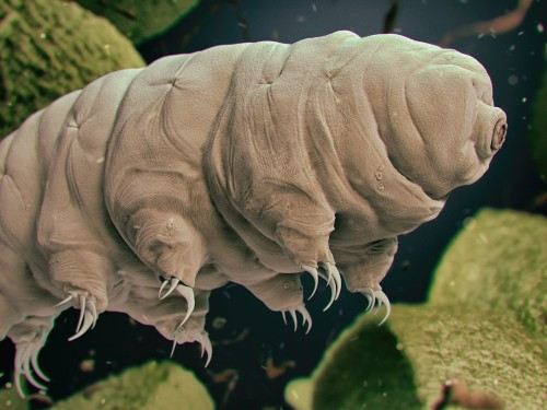 Cool facts about tardigrades, or the water bear - Business Insider