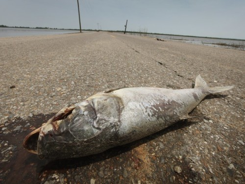 Dead zone in Gulf of Mexico will be the size of Massachusetts in 2019