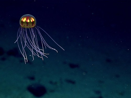 Tiny plastic particles are polluting the deepest point in the ocean