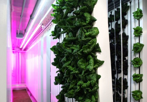 Elon Musk's brother is building vertical farms in shipping containers