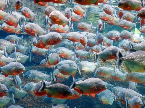 Fintechs — a 'shoal of piranhas' — have forced banks to switch from 'compete to collaborate'