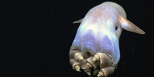 Octopuses are officially the weirdest animals on Earth