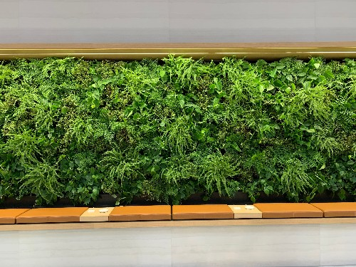 Work places installing plant walls to attract millennials - Business Insider