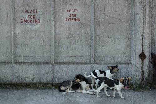 Chernobyl workers are adopting the site's contaminated dogs, but not all of them are safe to pet