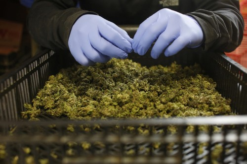 A hedge fund that focuses solely on marijuana is crushing it