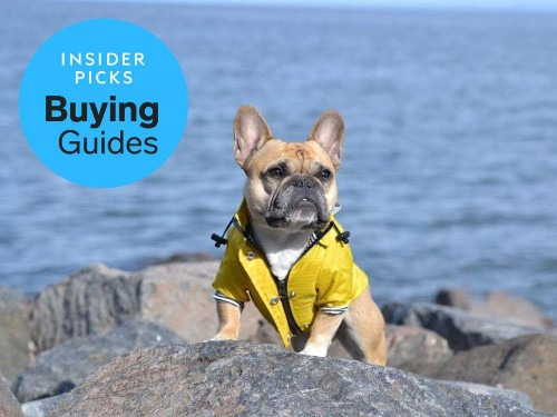 The best raincoats for dogs - Business Insider