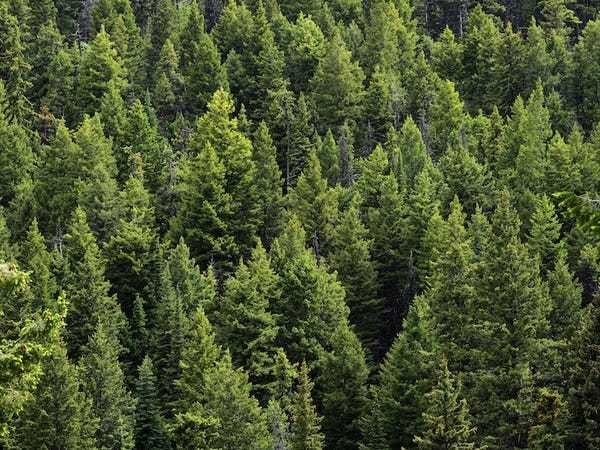 American trees are migrating west, and no one knows why - Business Insider