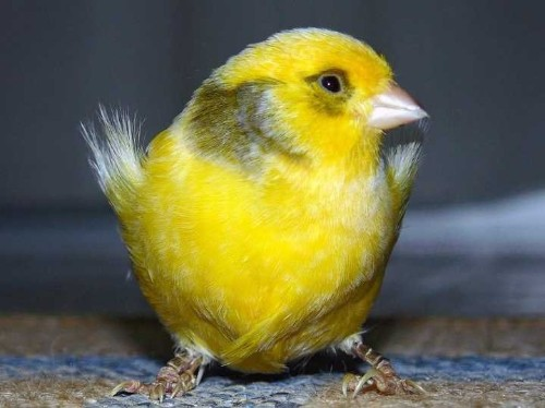 The Economic 'Canary In The Coal Mine' Has Hit A High Note