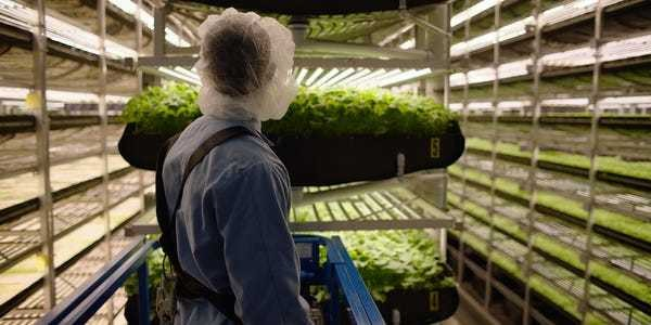 AeroFarms and Dell Technologies work together to improve agriculture - Business Insider