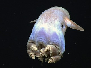 Octopuses are officially the weirdest animals on Earth - Business Insider