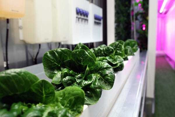 Elon Musk's brother is building vertical farms in shipping containers - Business Insider