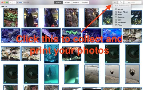How to use Apple's new Photos app