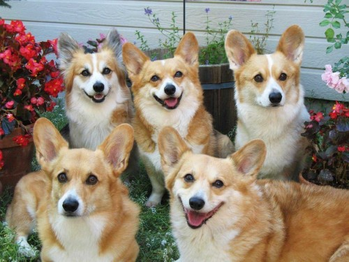RANKED: The 11 Best Dog Breeds