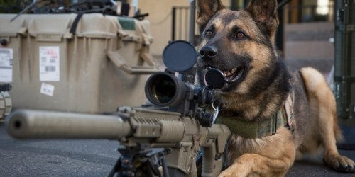 7 dog breeds that have served alongside US and allied troops