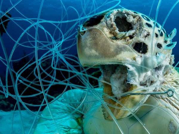 Photo of sea turtle stuck in plastic highlights ocean pollution issue - Business Insider