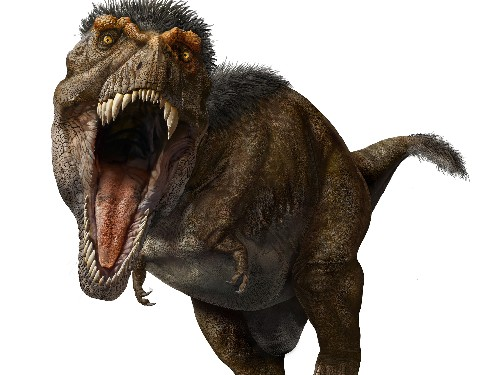 T. rex had stiff jaws that bit down with more than 7 tons of pressure