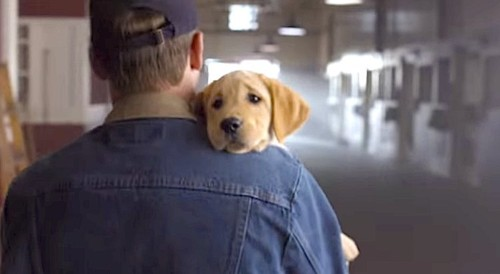 Budweiser's Story Of A Puppy, A Clydesdale, And The Humans Who Don't Understand Dog-Horse Love Won The Super Bowl